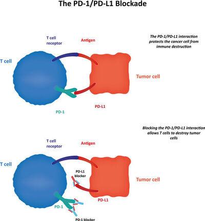 PD-1 mechanism